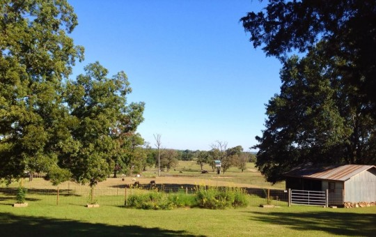 Blessings Farm